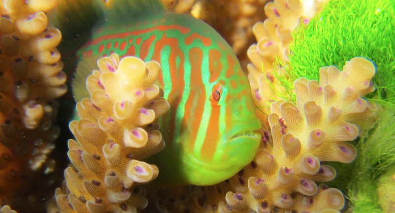 Illustration for article titled The Healthiest Corals Are Also the Fattest
