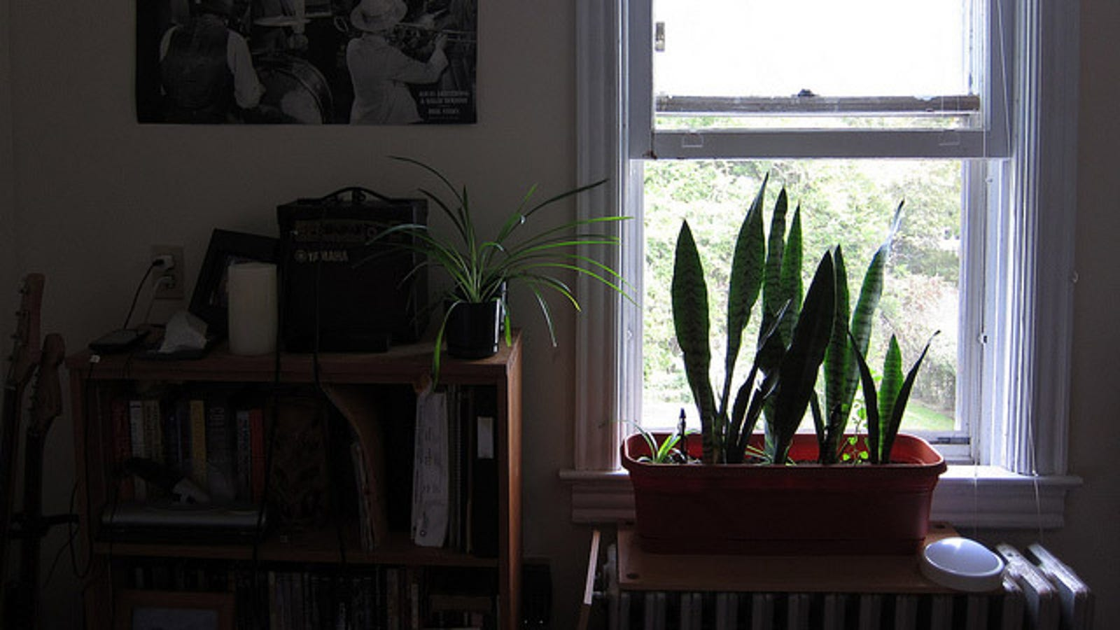 Keep A Snake Plant In Your Bedroom To Improve The Air