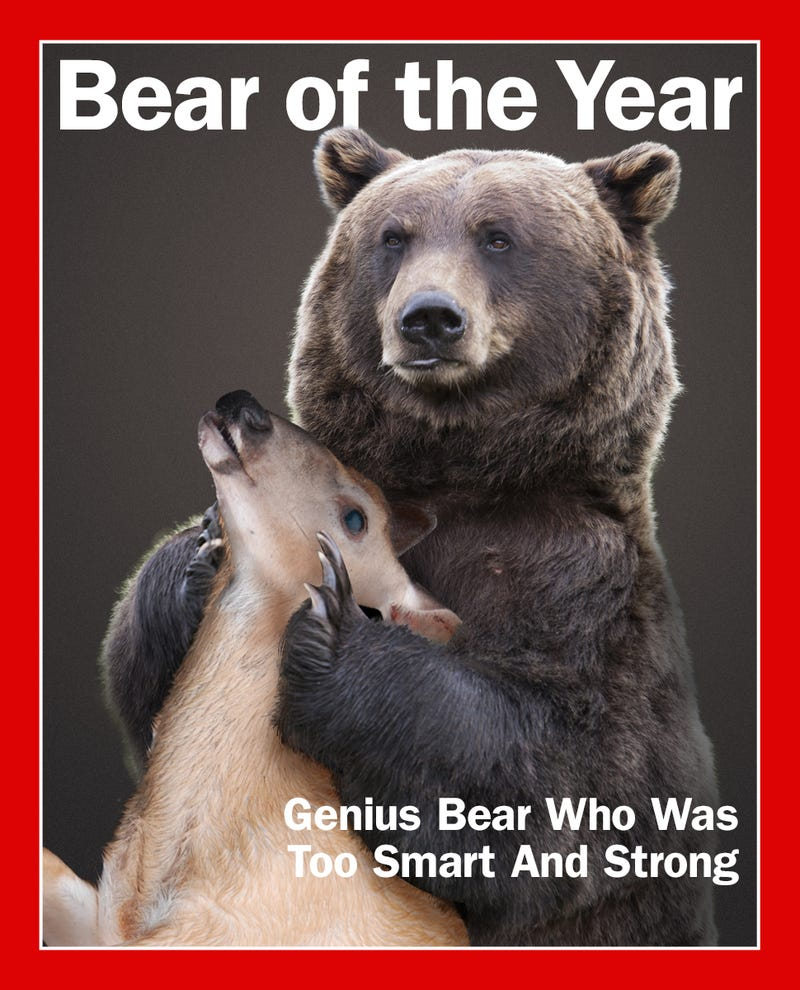 Illustration for article titled The 2014 Deadspin Bear Of The Year