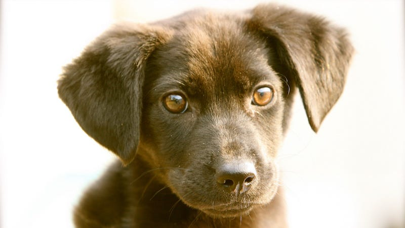 Petfinder's Picks for the Best Pet for Your Child, Based on Their Age