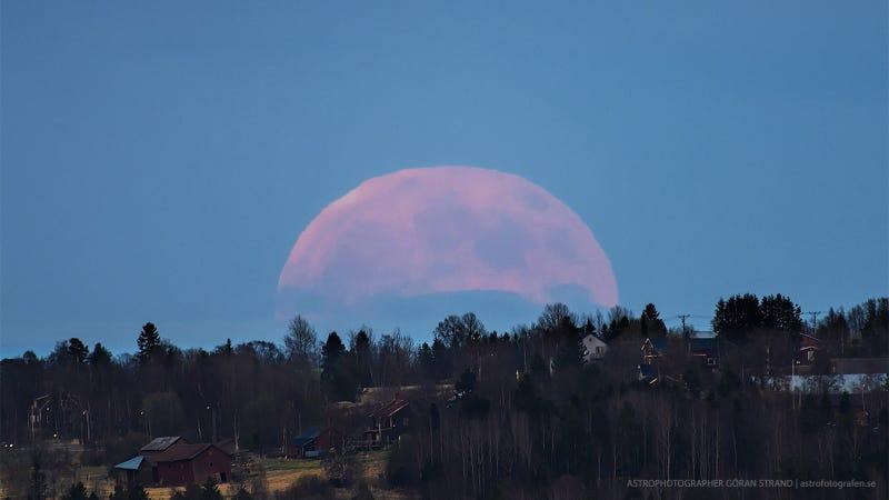 Illustration for article titled La Luna llena (y en viernes 13), como no la habías visto en 100 años