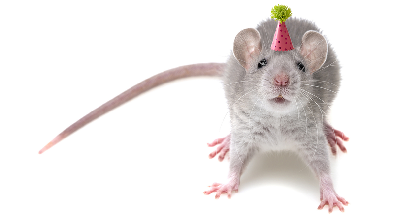 A mouse feeling ready to party, presumably because it has been dosed with MDMA.
