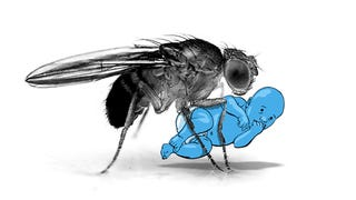 Illustration for article titled You Are Not a Fruit Fly: Why You Should Side-Eye Science Headlines