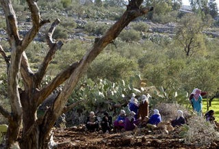 Palestinian women sit amid Budrus olive groves in Dec. 2003 to protest building ofbarrier. (David Silverman/Getty Images)
