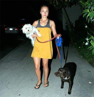 """Illustration for article titled Hayden Panettiere """"Walks"""" Her Dogs"""