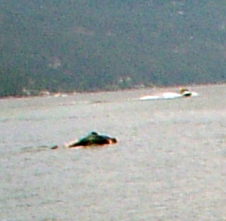 Illustration for article titled Baby Ogopogo Found in Canadian Lake?