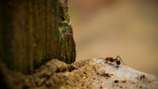 The Difference Between Termites and Ants, and How to Tell Them Apart