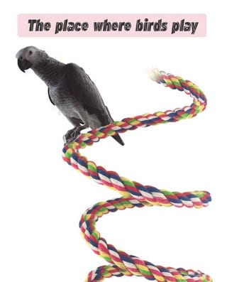 Rope Bungee Bird Toy, from $9.99