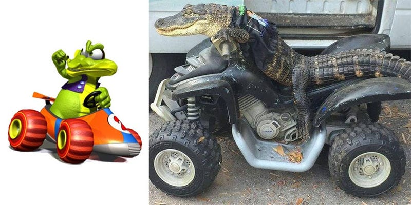 Illustration for article titled Krunch From Diddy Kong Racing Is Real, Lives In Florida