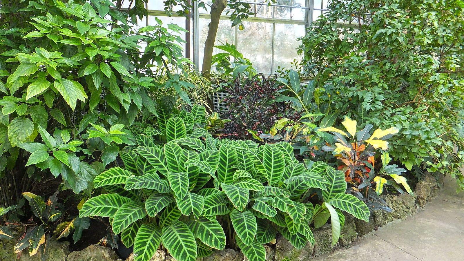 Plants Are Definitely Not Conscious, Researchers Argue