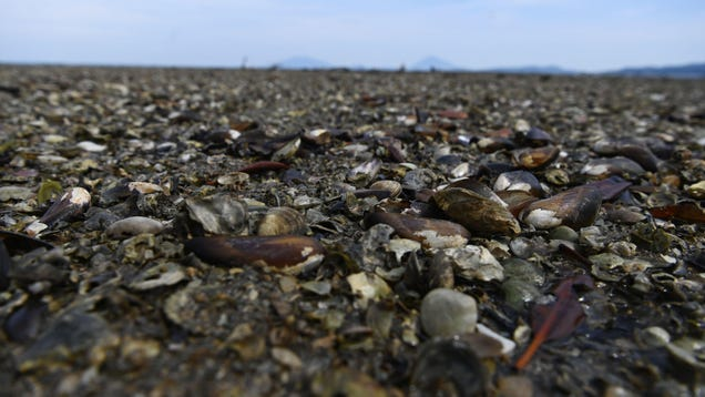 An Estimated 1 Billion Sea Creatures Cooked to Death in the Pacific Northwest Heat Wave