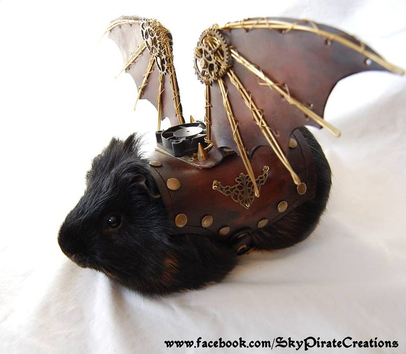 Illustration for article titled Every Pet Guinea Pig Needs A Pair Of Leather Steampunk Wings