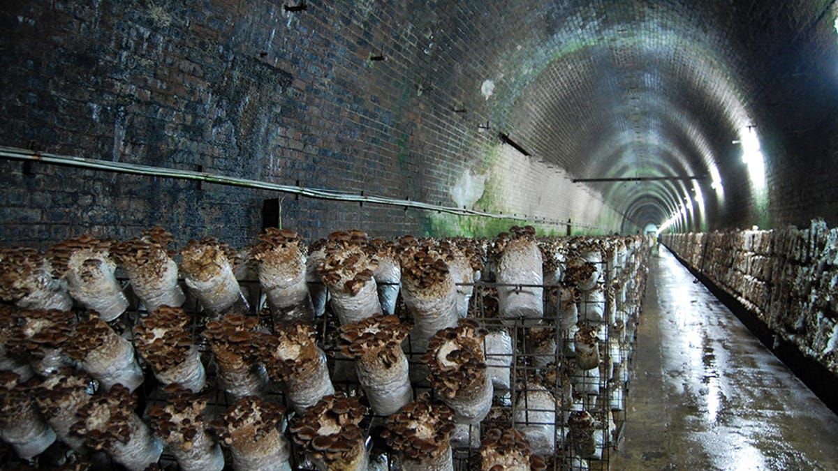 Why a Small Pennsylvania Town Is the Mushroom Capital of the World