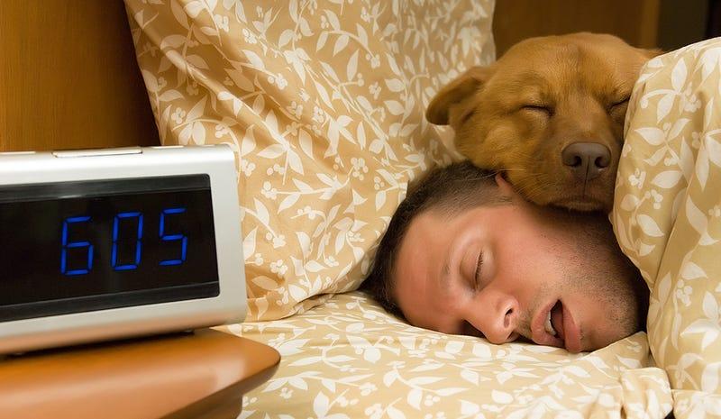Illustration for article titled Cómo afecta a nuestro sueño compartir la cama (o habitación) con el perro