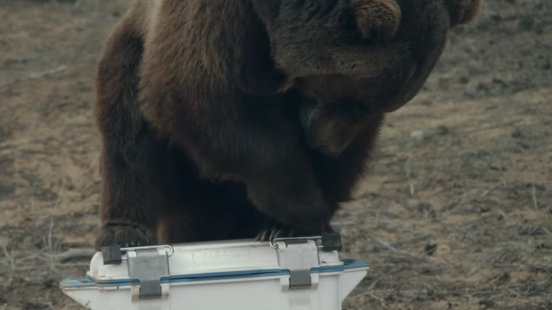 OtterBox | Bear Proof