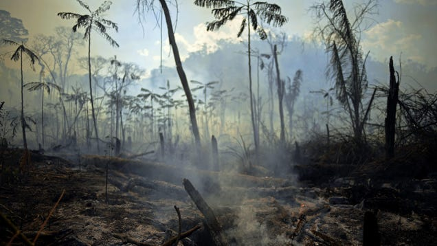 40 Percent of the Amazon Is on the Brink of Transitioning to Savanna