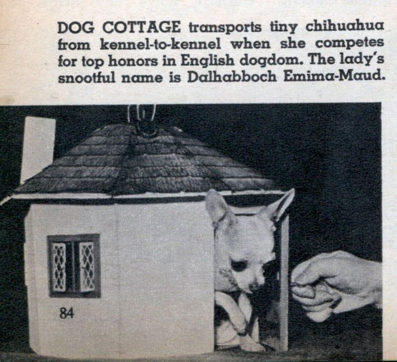 Illustration for article titled Doggie Do