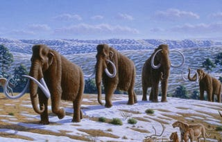 Illustration for article titled Did mammoths die out because of breastfeeding?