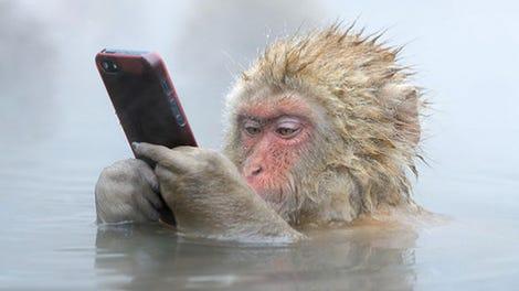 Este Grupo De Monos Salvajes Ha Aprendido A Robar Y Extorsionar A