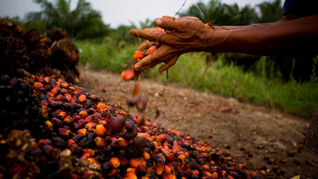 What s So Terrible About Palm Oil?