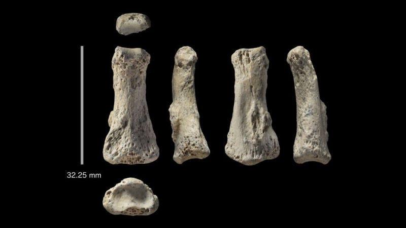 Seis ángulos diferentes del dedo que se encontró en el yacimiento Al Wusta de Arabia Saudita