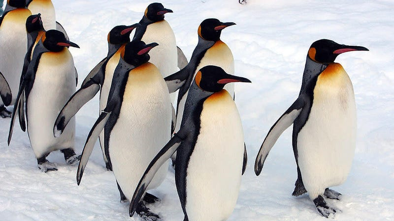 Illustration for article titled These Gay Penguins Should Sue If Their Adoption Doesn't Work Out