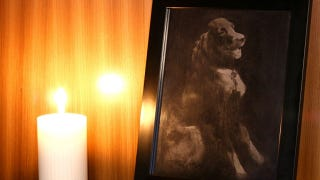 Illustration for article titled This Dog Photo Is Made With Her Own Ashes
