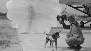 Illustration for article titled The Heroic Parachuting Dogs of D-Day