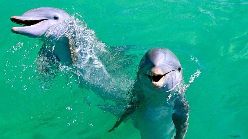 Two supposedly intelligent, perceptive marine mammals.