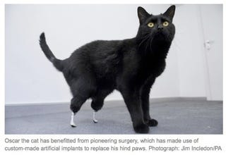 Illustration for article titled Artificial Cat Legs Help Kitty Walk Again