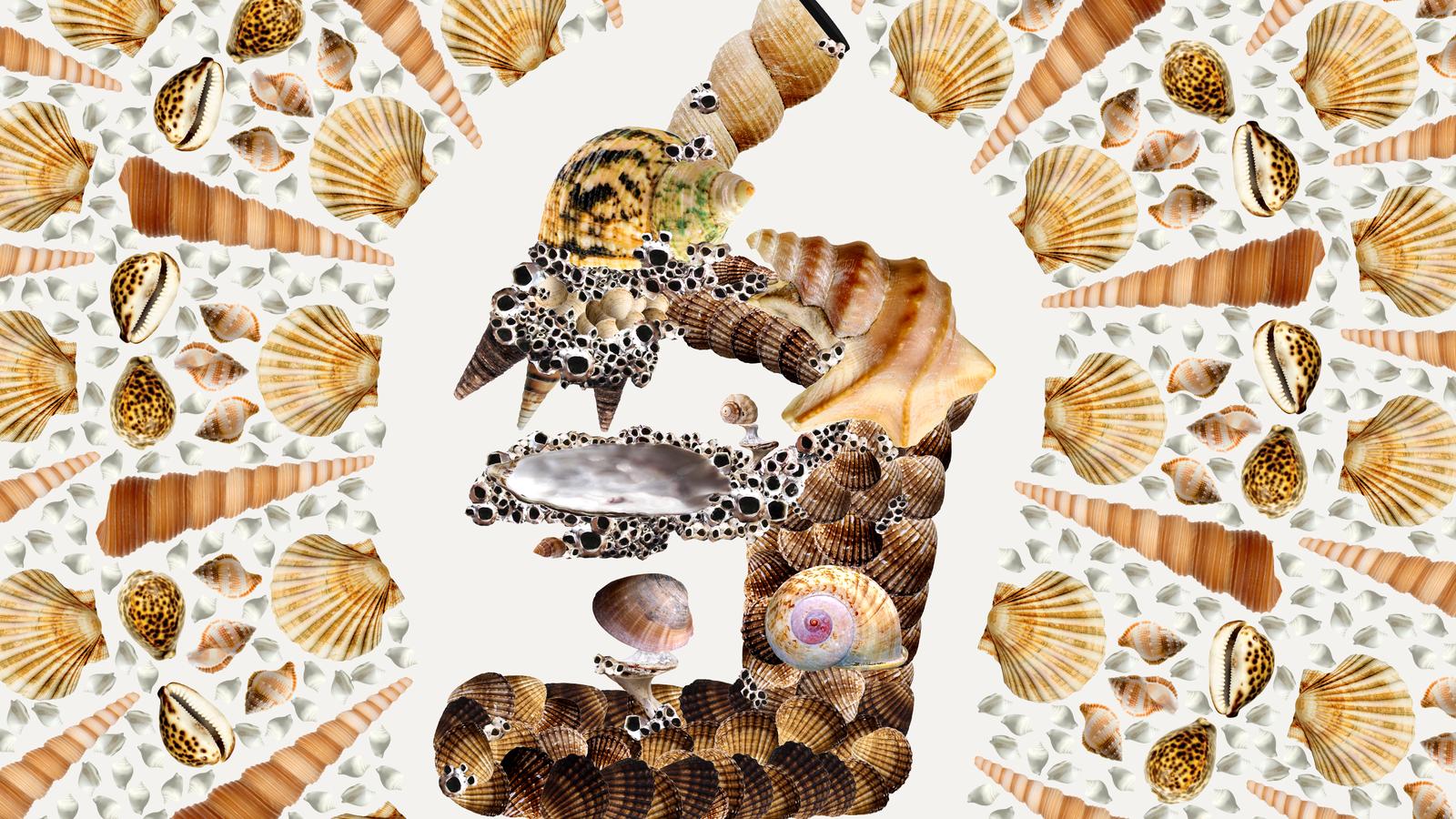 The Secret Science of Shell Seeking