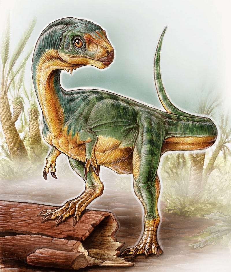 Illustration for article titled They're Calling This Adorable Creature The 'Platypus' Of Dinosaurs