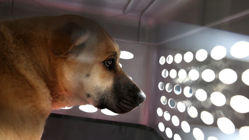 File photo of a dog in a crate.