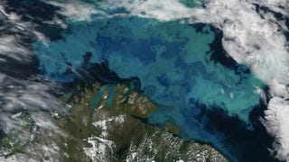 Illustration for article titled This is what a massive plankton bloom looks like from space