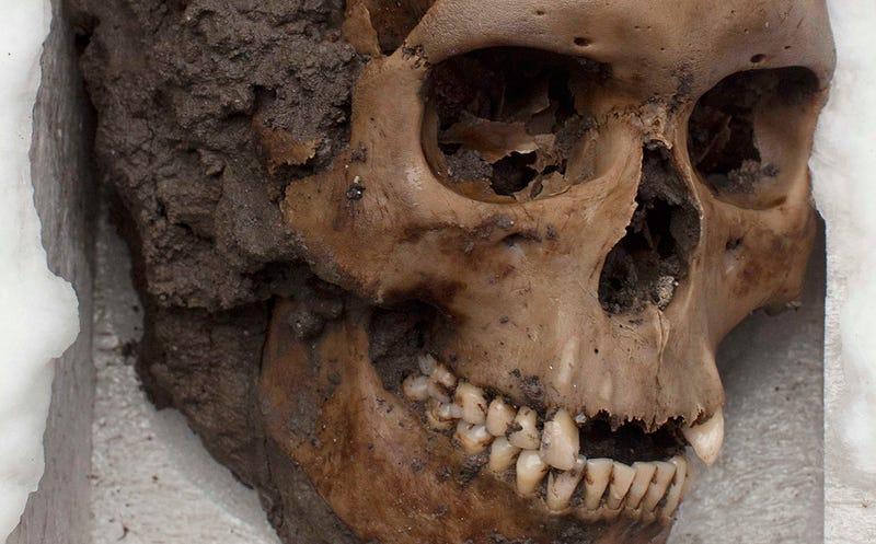 Un cráneo encontrado en el Templo Mayor, en ciudad de México. Foto: AP