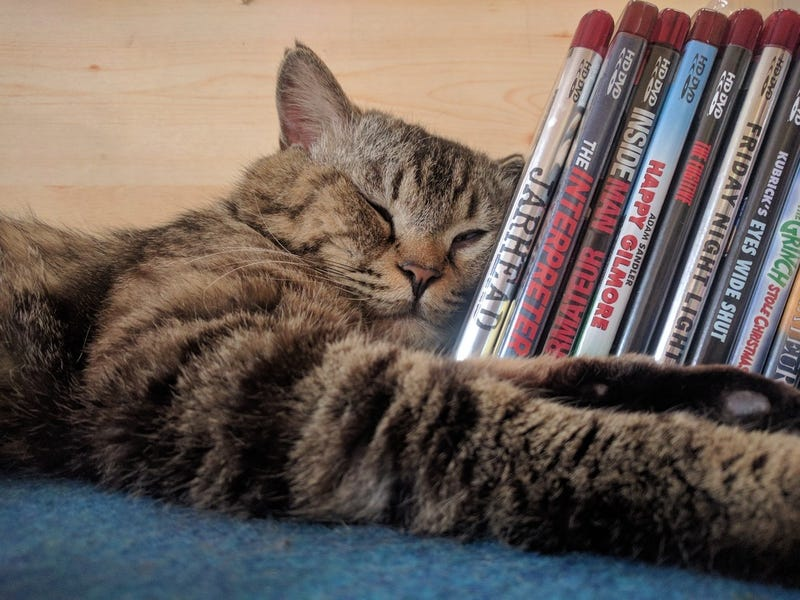 Illustration for article titled Cat casually enjoys HD-DVD collection...