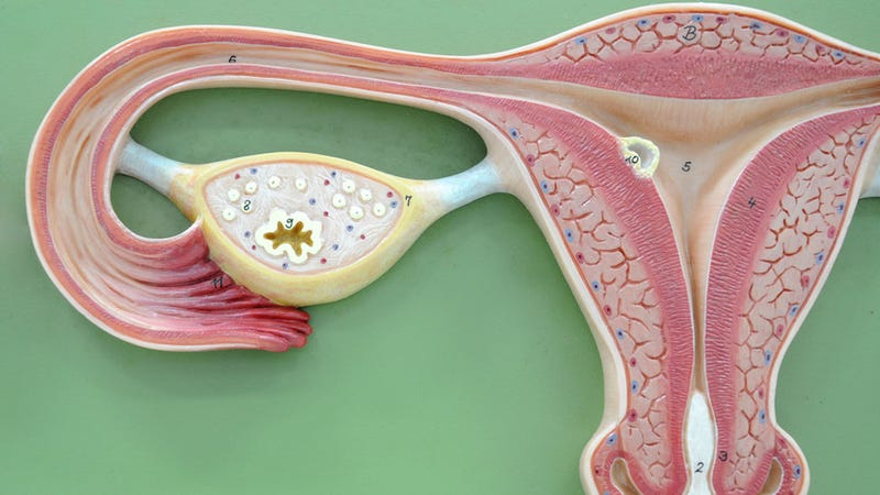Illustration for article titled New Test Detects Early-Stage Ovarian Cancer