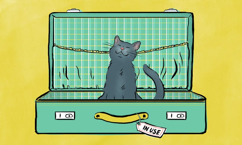 Illustration for article titled The Cat Peed In My Suitcase, Of Course