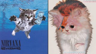 Illustration for article titled Iconic Album Covers Reimagined With Kittens