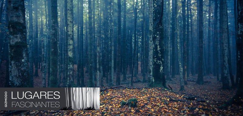 El bosque Hoia-Baciu, el misterioso triángulo de las Bermudas de Transilvania