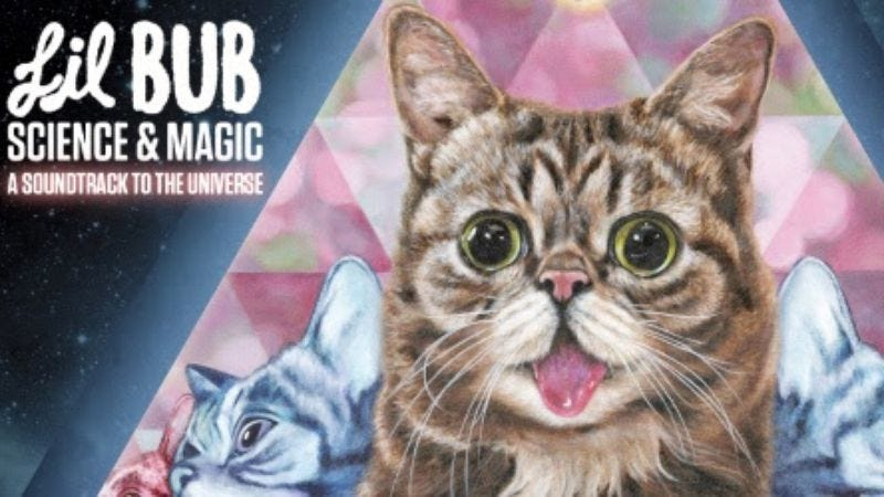 Illustration for article titled Internet cat Lil Bub is releasing her debut album, Science & Magic