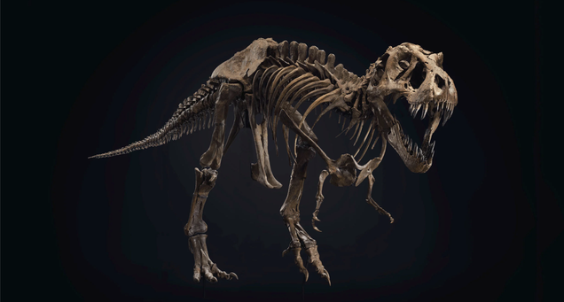 Auction of Unusually Complete T. Rex Skeleton Could Smash Sales Record