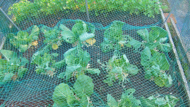 Protect Your Garden Beds from Critters with Netting and Masonry