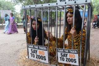 Illustration for article titled Zoos are prisons: One brave country decides to shut them all down!