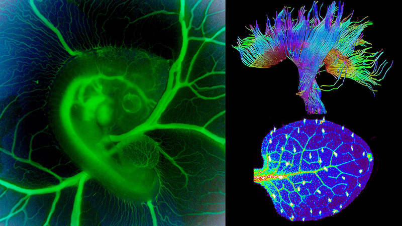 Illustration for article titled These Science Photos Are So Beautiful They're Basically Art