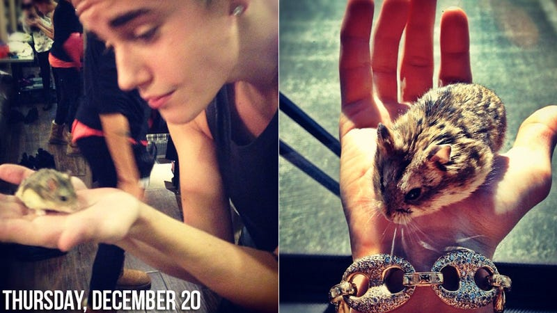 Illustration for article titled Justin Bieber Has Made an Enemy of the California Hamster Organization
