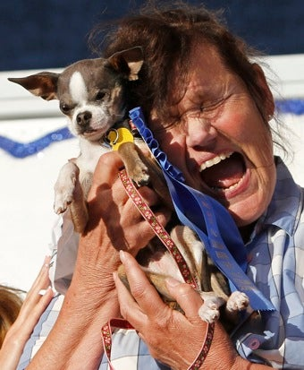 Illustration for article titled Chihuahua Wins World's Ugliest Dog Contest