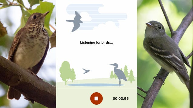 New Shazam for Birds Will Identify That Chirping for You