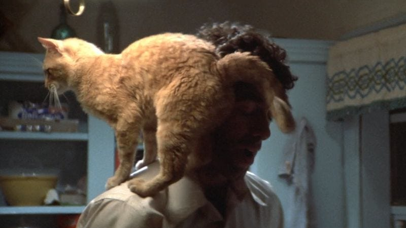 Illustration for article titled Elliott Gould solves a crime—but not before feeding his cat