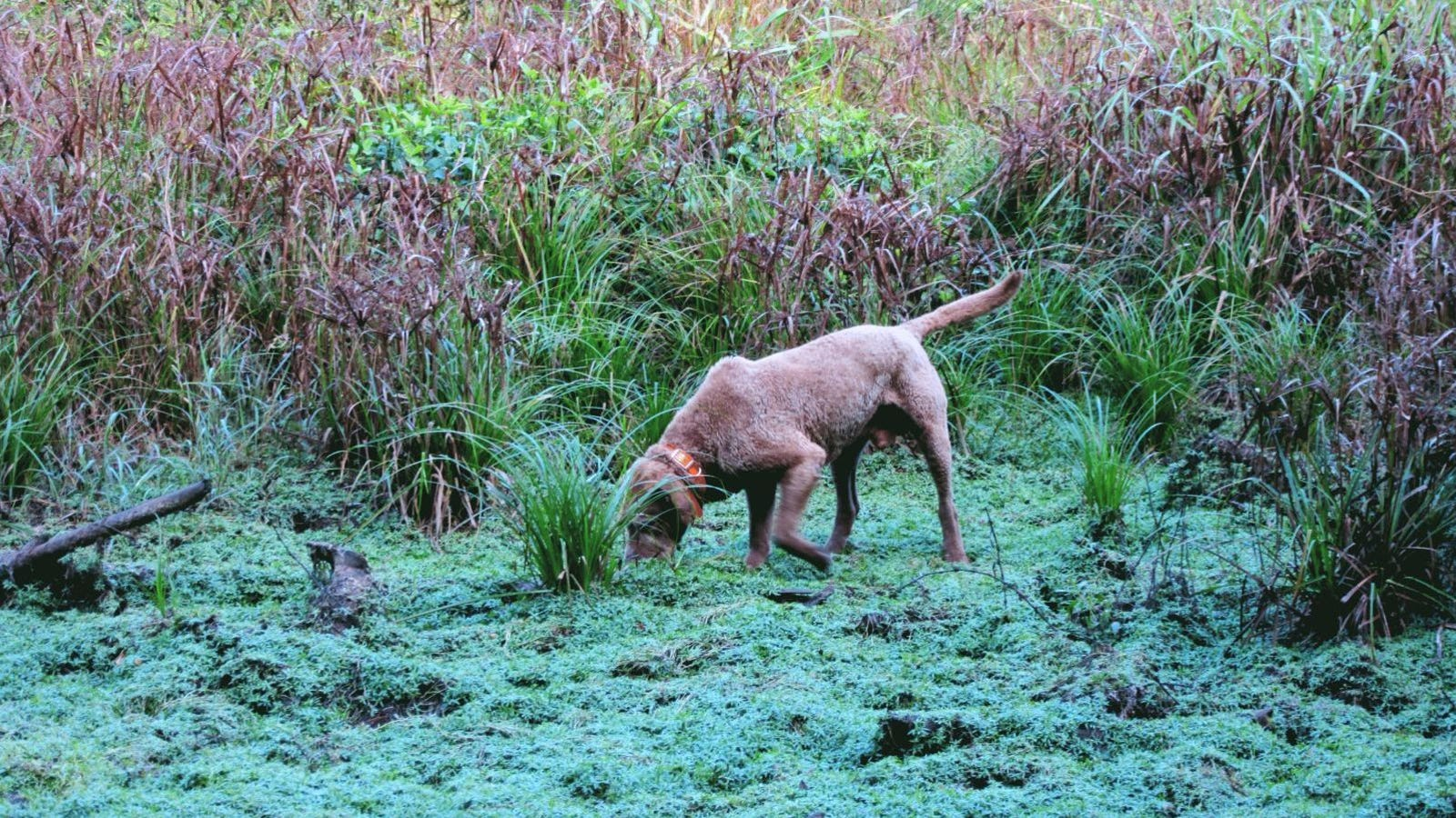 QnA VBage Meet the Poop-Sniffing Dog Helping Map a Giant Wildlife Sanctuary